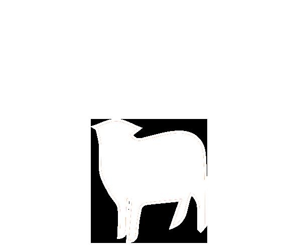 pecora